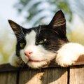 野良猫は何故庭や車に糞尿をするの?猫避けの対策方法