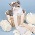 猫をお風呂好きにする4つの方法とそのメリット