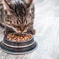 軟便の猫におすすめのキャットフード7つ!フード以外にも原因がある?