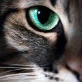 猫の視力が悪くなったら表れるサイン5つ!こんな小さな兆候でも見極め…