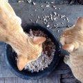 猫にお米は与えない方がいい理由と注意点