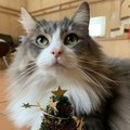 猫が興味を持つ『おもちゃの特徴』3選!どんなおもちゃが好み?