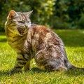 猫が思わず『威嚇してしまう人』の特徴4つ