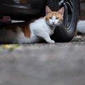 猫がエンジンルームに入る理由と対処法