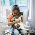 【新型コロナ】自分や家族が無症状のとき、猫にうつしてしまう可能性…