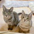 猫がしている『飼い主への気遣い』5選!意外と優しい猫の一面を見て…