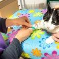 『怯えている猫』がみせる3つのサイン!飼い主がすべきケアとは?
