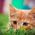猫の年齢の見分け方と判断のポイント
