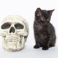 猫の頭蓋骨の構造とその特徴とは