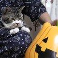 大好きなパパとお揃いのパジャマが嬉しい猫ちゃん