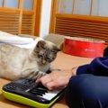 音楽の監修を務める猫さん、問答無用で演奏にダメ出し!