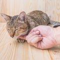 猫が喉を鳴らす理由とは?あなたはいくつ知っていますか?