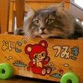 猫の分離不安の症状と改善させる方法