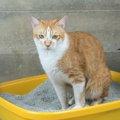 猫がトイレの外にウンチを飛ばしてしまう原因と対処法4つ