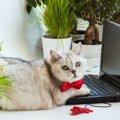 猫が『キーボード』の上に乗りたがる3つの理由と対策