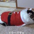 「プレゼントは配るよりもらいたいニャ!」猫サンタ廃業の瞬間!