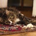 猫の夜鳴きの原因とやめさせるための4つの対策