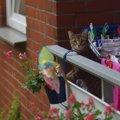猫ってどのくらいの高さなら落ちても平気なの?