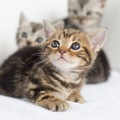 子猫の飼い方 4つの基礎知識