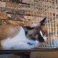 猫3匹と暮らす夫婦が片目のノラ猫に遭遇…保護を試みるも?(後編)