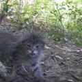 森に捨てられた子猫たち……偶然見つけたカップルがとった行動が優しす…