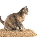猫がトイレの砂を食べてしまう!その理由と対処法