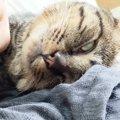 熟睡しすぎて白目剥いちゃう猫ちゃん