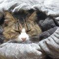 極上クッションに吸い込まれる猫ちゃん、ふみふみが止まらない