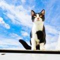 猫と飛行機に乗る方法とその際の注意点