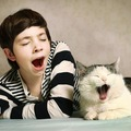 猫の歯みがきしてる?怖い歯周病から愛猫を守る為の方法