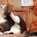 猫の蚊よけ対策!お家で作れる手作りスプレー