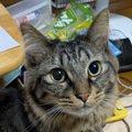 猫が『飼い主を呼ぶとき』にする5つの行動