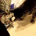 落ちたごはんを一粒拾ってポリポリ…控えめすぎる猫ちゃんの食事風景