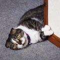 ひとり遊びが上手な猫さん!はしゃいでおもしろい動きをします♡