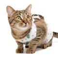 猫の避妊手術後のケアの方法と注意点