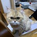 猫が飼い主の顔をじっと見てくる理由5つ