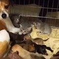 種族を超えた愛情♡子猫のお世話を懸命にする母犬がとっても可愛い!