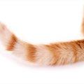 猫の気持ちはしっぽでわかる!観察のポイントについて