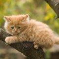 猫が高い所から降りられなくなっていたら?4つの対処法