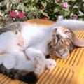 猫が愛情を受け入れた人にだけする仕草5つ