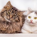 米国で猫2匹が新型コロナウイルスに感染!ペットに予防策を