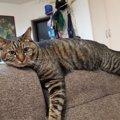 """猫に『救われたこと』ランキングTOP5!飼い主が""""助けてもらった&…"""