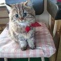 カンパチ猫船長とはー乗組員を癒す業務内容をご紹介!