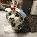 構いすぎ厳禁!猫の『やめてほしいサイン』5選