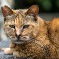 サビ猫は賢い!その性格や特徴、魅力とは
