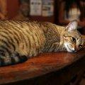 猫とグルメが好きな人注目!猫がいる飲食店特集