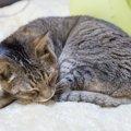 17年間行方不明の猫発見!飼い主との再会を果たす事ができた理由