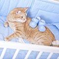 猫の出産の兆候とは?対処すべきサインと注意出産時の注意点