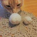 愛猫の抜け毛で毛玉ボールを使ってみませんか?