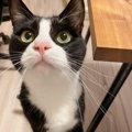 猫が飼い主の背後に回るとき考えている2つのこと